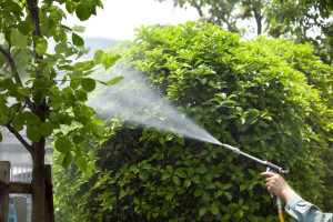 pesticide detoxification